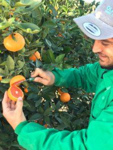 naranjas naturales agricultura sostenible navel cara cara