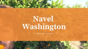 naranja Navel Washigton