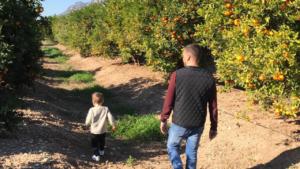 finca de naranjas y mandarinas