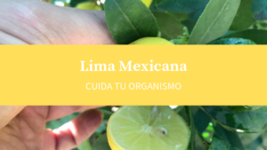 lima mexicana citrico