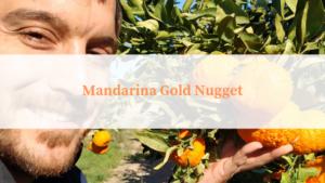 mandarina gold nugget